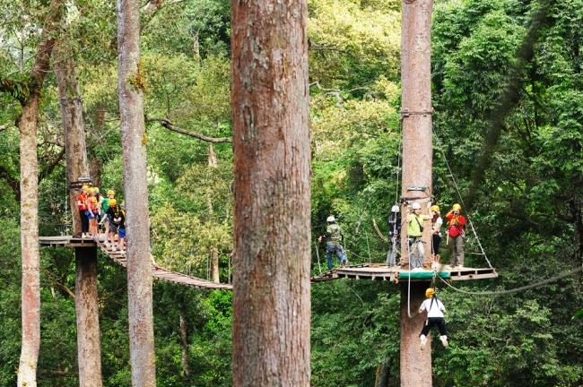 Jungle Flight.