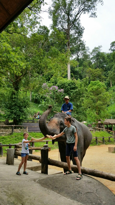 Half day Mae sa Elephant Camp, Orchid Farm , the Long neck village and free transfer to Tiger Kingdom.