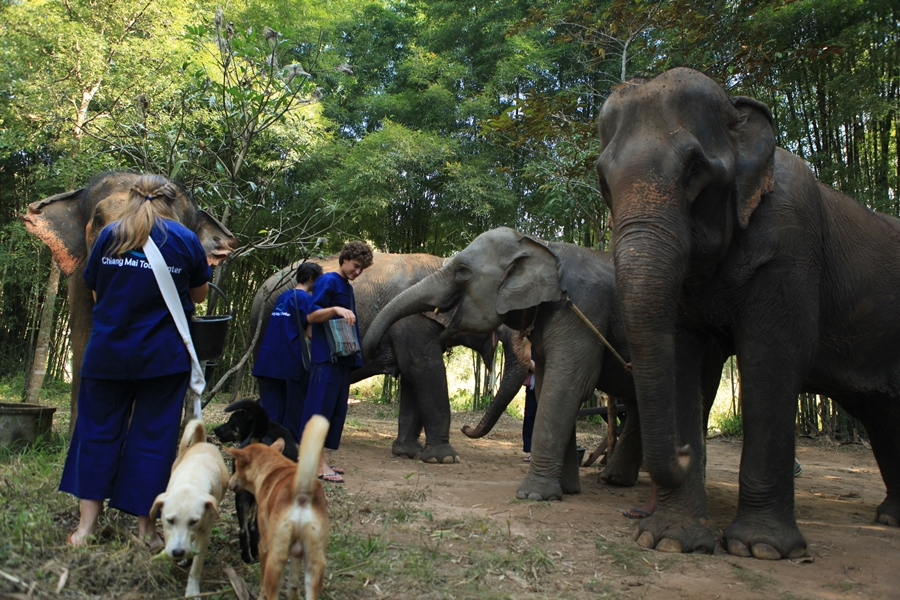 Private Half day Morning  elephant training program + Long Neck Village with free transfer to the Tiger Kingdom