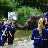 2 days 1 night Elephant Traininng + Long neck village + Chiang Mai Boutong Stickey waterfall + Chiang Dao area.