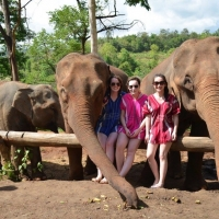 Elephant Care and No Riding program with trekking.