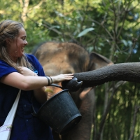 Private Half day Afternoon elephant training and the long neck village with free transfer to the Tiger Kingdom
