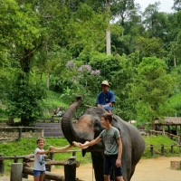 Half day Mae Sa Elephant Camp + Orchid Farm + Long Neck village + Free transfer to Tiger Kingdom. Chiang Mai Tours