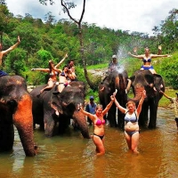 Elephant Training and Trekking