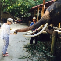 Private Mae Sa Elephant camp - Long Neck Village - Orchid and Butterfly Farm -Tiger Kingdom - Handicraft village