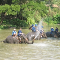 Elephant Conservation Center Lampang