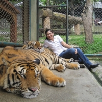 Visit Tiger Kingdom and play with the tiger  if you prefer to.  www.chiangmaitourcenter.com